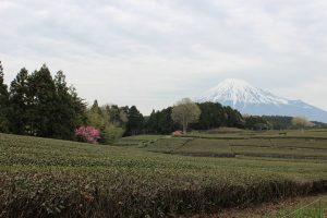 お茶畑と富士山
